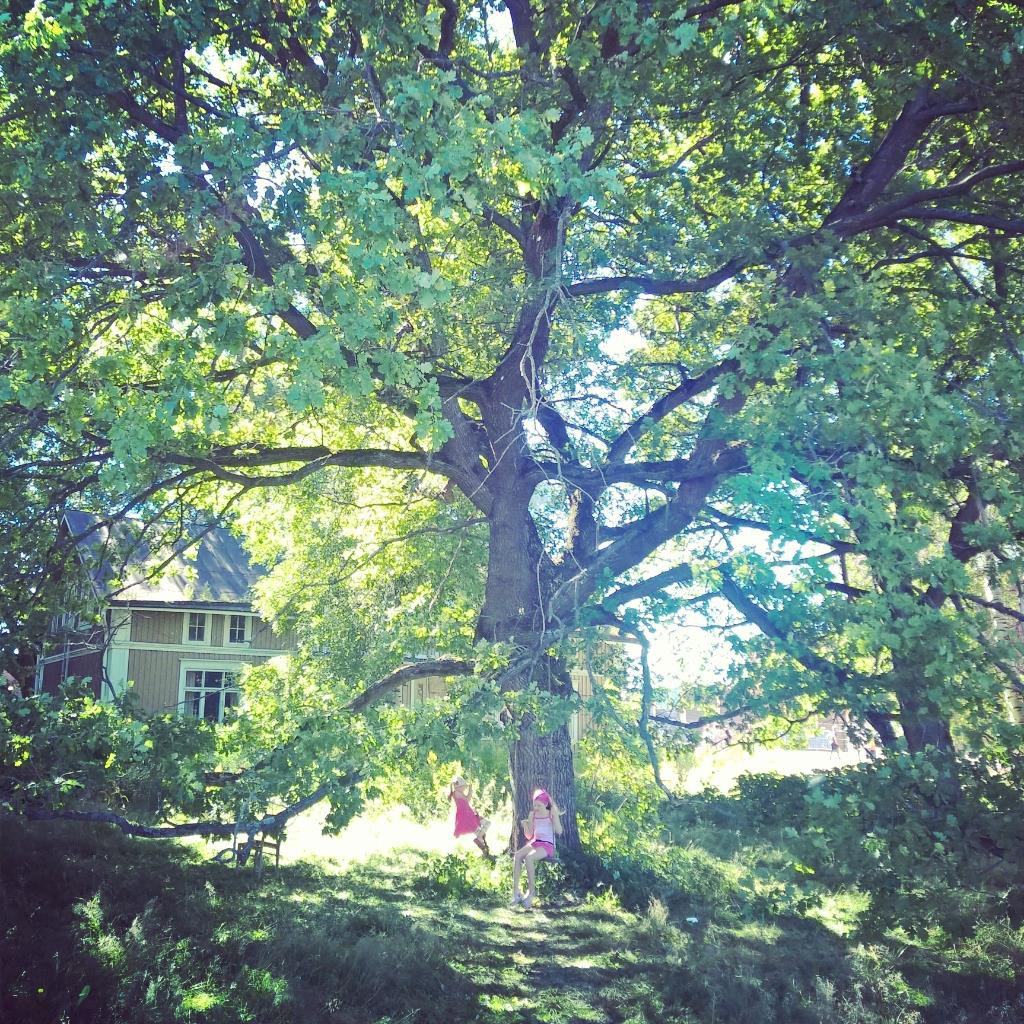 Hoitamaton puisto voi usein olla aika kaunis. Kuva Hiedanrannasta: Sanna Huikuri.